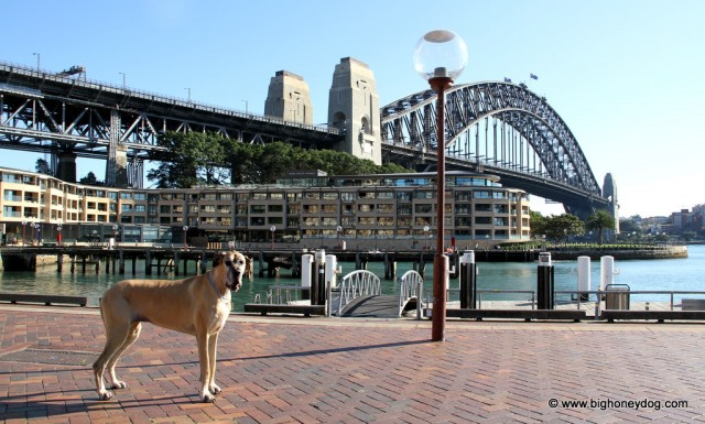 Honey+HarbourBridge