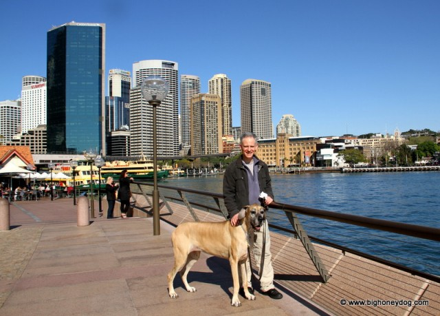 P+Honey-CircularQuay-view