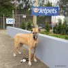 Honey-JetPets-depot